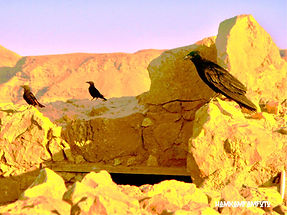 Birds of Masada.JPG
