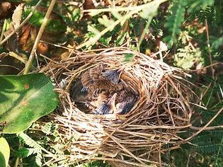 brown bird on nest during daytime_edited