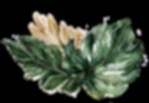 logo-leaf no background.png