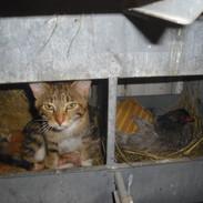 kittens in nest box