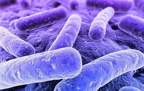 Bacteriología-General-WEB-1.jpg