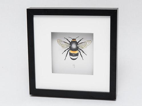 Jenny Haslimeier | Bumble Bee Print