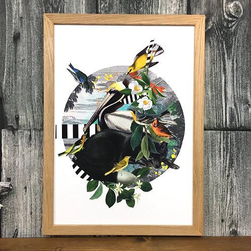 Diedododa   Bird Bonanza A3 Prints