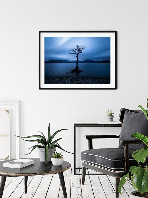 Kunal Tewari Photography | Standing tall: Milarrochy Bay, Loch Lomond