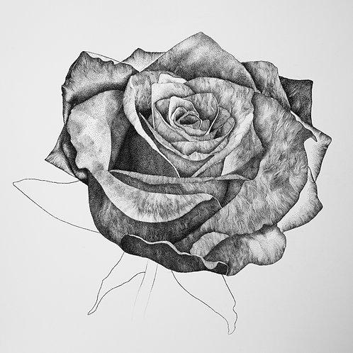 "Alan Black | Rose Giclée print 10x10"""