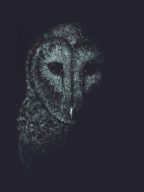 Craig McEwan Illustration | Black & White Owl A3 Print