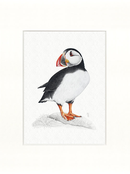 Jenny Haslimeier | Puffin Print 8 x 10 inches