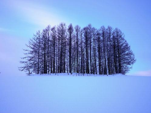 "Alan Black   Hokkaido trees, Japan 11x14"" Photographic print"