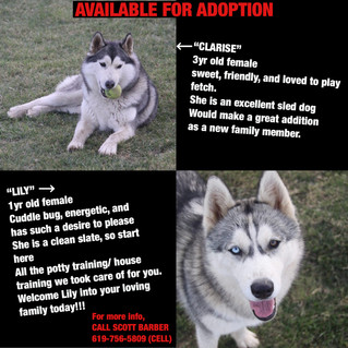 2 Available Females