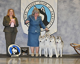 Kendra Ireton, Kayenta Siberian Team, Sibeian huky club of america, sled dogs