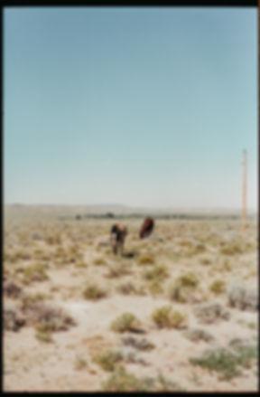 horses184.jpg