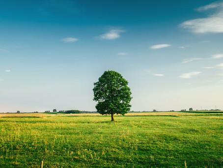 Giving Tree   Sat., July 28 - Sun., Aug. 12