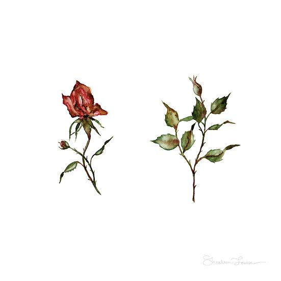 Loose Rosebuds Watercolor Painting — Print