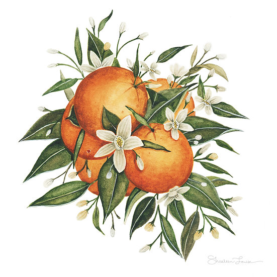 Orange Blossoms Watercolor Painting — Print