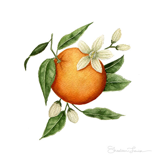 Mini Orange Blossom — Print