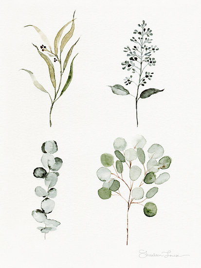 Eucalyptus Branches Watercolor Painting — Print