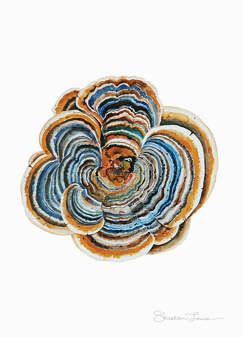 "Trametes ""Turkey Tail"" Mushroom Watercolor Painting — Print"