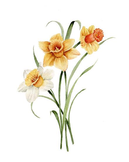 Daffodil Watercolor — Print