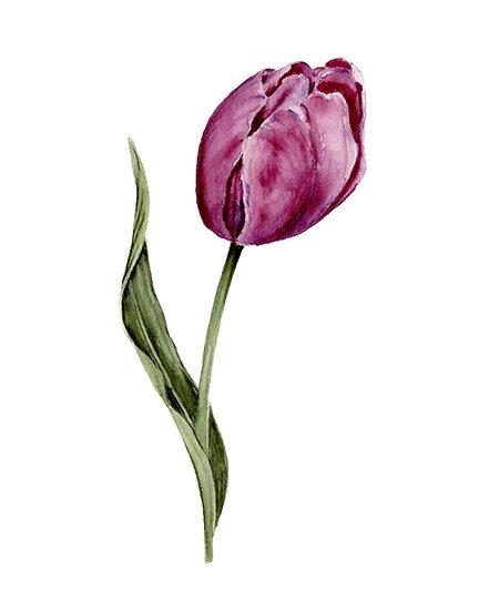 Purple Tulip Watercolor — Print