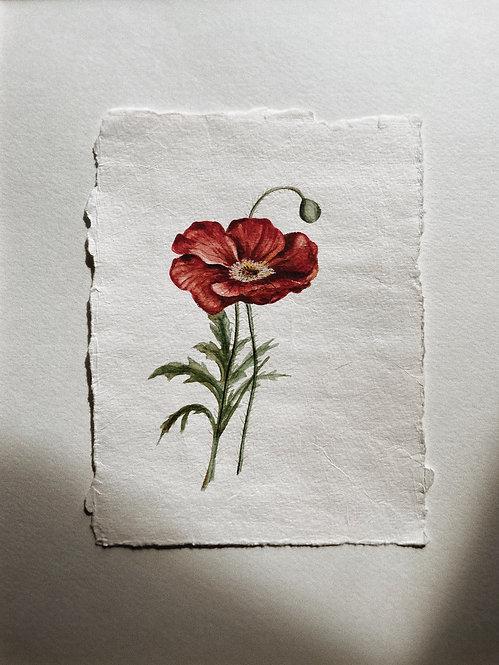 """Red Poppy"" — 6 x 8 inches, Original"