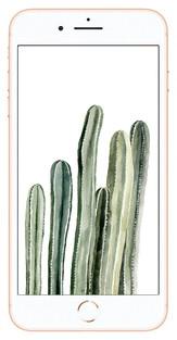 cactusphone.jpg