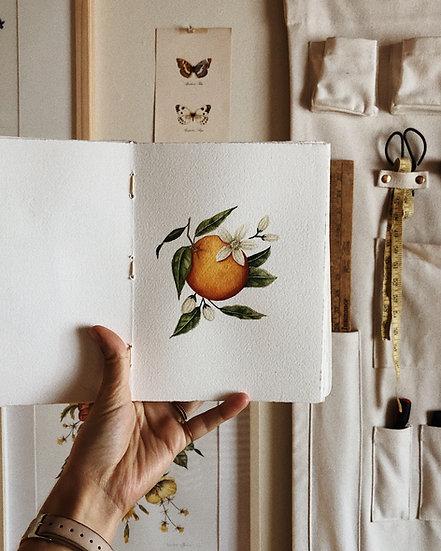Mini Orange Blossom — Print