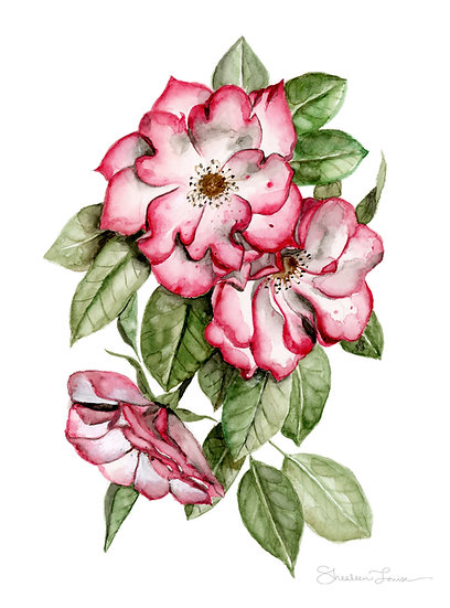 Blooming Pink Roses Watercolor Painting — Print
