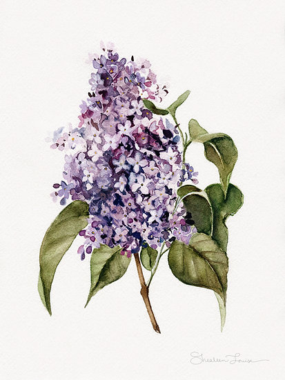 Lilac Branch Watercolor Painting — Print