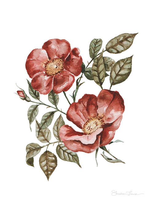 Red Wild Roses Watercolor Painting — Print