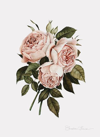 Three English Roses Watercolor Painting — Print