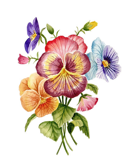 Colorful Pansies Watercolor — Print