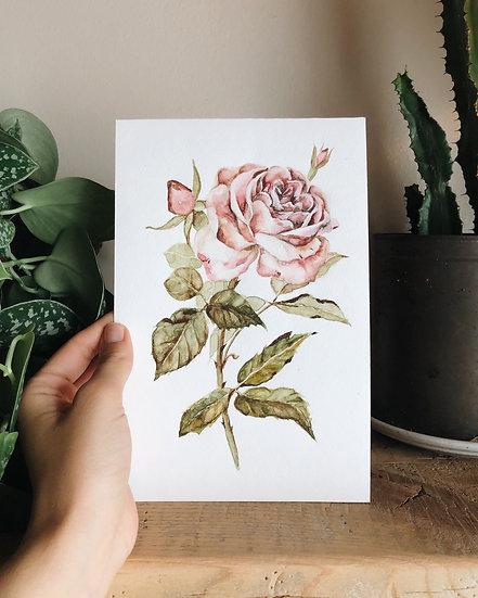 Vintage Rose Original Watercolor Painting —5.5x8