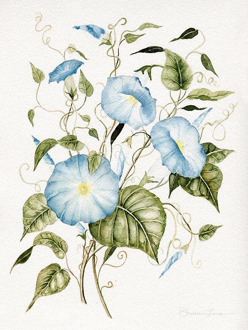 Morning Glories Watercolor Painting — Print