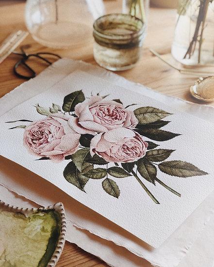Three English Roses Original Watercolor Painting — 8.5x10