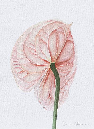 Pink Anthurium (Laceleaf/Flamingo Flower) Watercolor Painting — Print