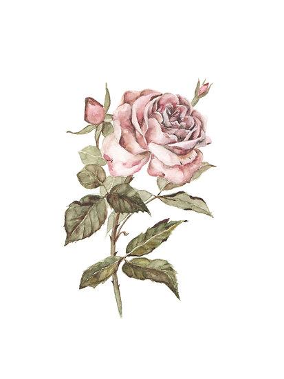 Simple Vintage Rose Watercolor Painting — Print