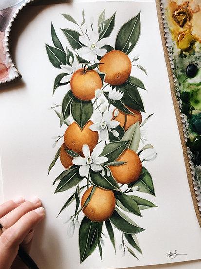 Orange Blossom Citrus Original Watercolor Painting — 9x12