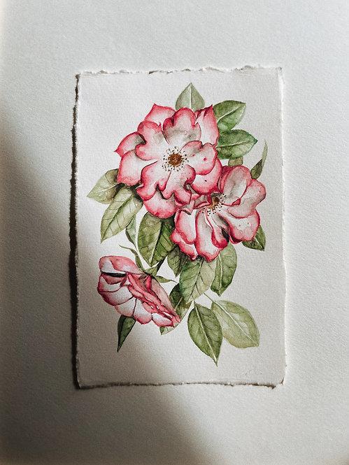 """Family Garden Roses"" — 6 x 9 inches, Original"