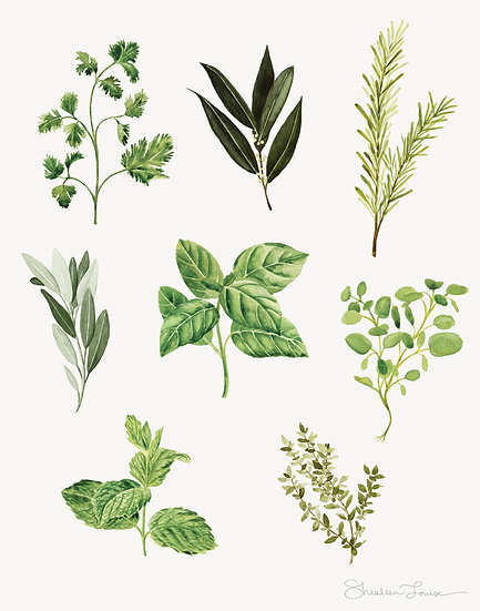 Herbs Watercolor — Print