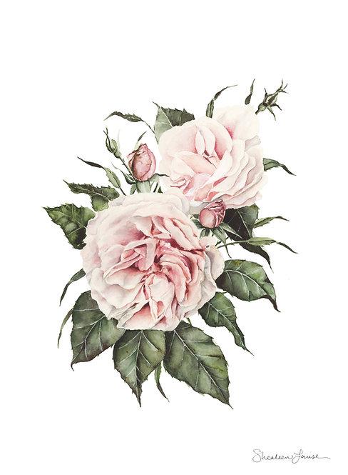 Garden Roses Watercolor Painting — Print