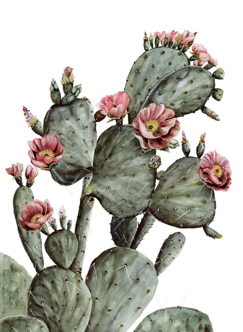 Flowering Prickly Pear Cactus Watercolor Painting Print