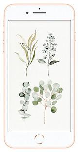 eucalyptusiphone.jpg
