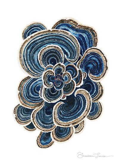 "Blue Trametes ""Turkey Tail"" Mushroom Watercolor Painting — Print"