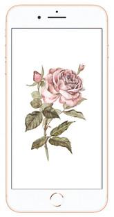 roseiphone.jpg
