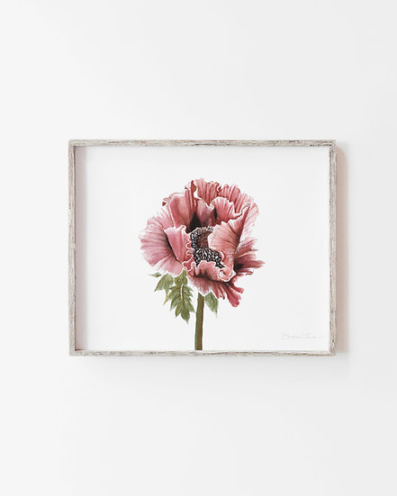 Pink Poppy Watercolor Painting — Print