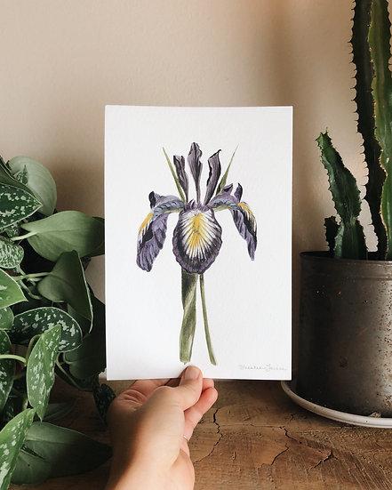 Blue Iris Original Watercolor Painting — 5.5x8