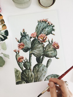 Flowering Prickly Pear