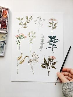 Delicate Floral Watercolor