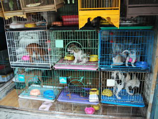 Andersen Sleater Sianni Files RICO Class Action Against Petland