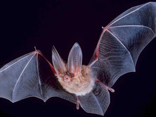 Dead Bat Found in Walmart Salad Prompts Recall